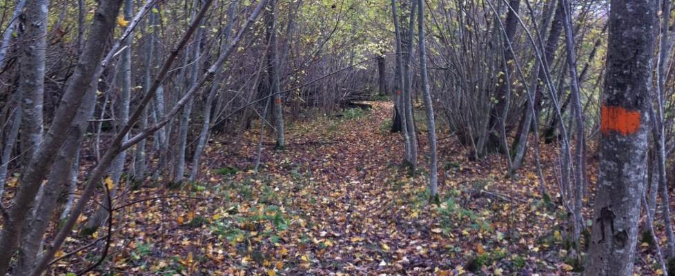 Spring långpass med Team Nordic Trail!
