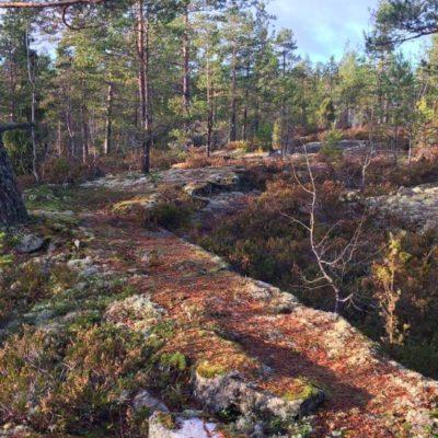 Träningsupplägg inför Sundsvall Trail